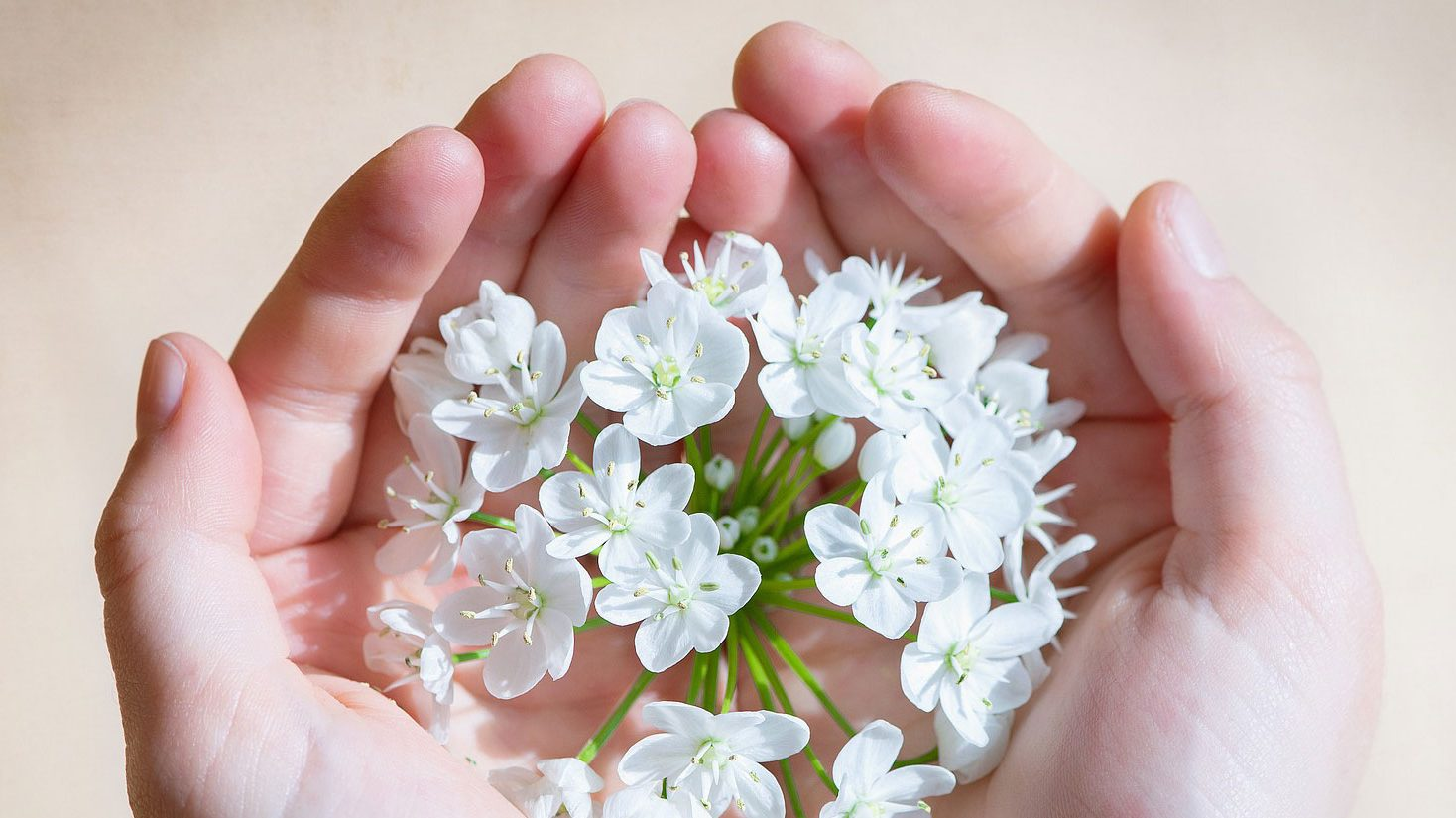 ידיים אוחזות פרחים לבנים, כפי שהן יאחזו ידיים של חולה הנוטה למות